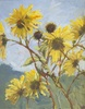 Jennifer Riefenberg / Wild Sunflowers 11 x 14, oil $700